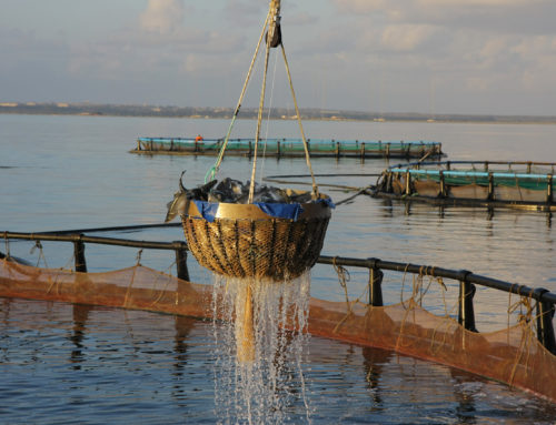 Παράταση υποβολής επενδυτικών προτάσεων επί ενεργών επαγγελματικών αλιευτικών σκαφών, για ένταξη  στα μέτρα 3.1.8 «Υγεία και ασφάλεια», 4.1.20 «Ενεργειακή απόδοση και μετριασμός της κλιματικής αλλαγής» & 3.1.22 «Προστιθέμενη αξία, ποιότητα των προϊόντων και χρήση των ανεπιθύμητων αλιευμάτων», του Ε.Π.ΑΛ.&Θ. 2014-2020