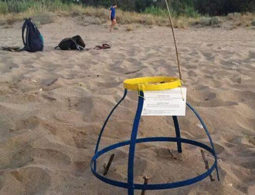 Οι θαλάσσιες χελώνες επιστρέφουν για να γεννήσουν στην Κρήτη