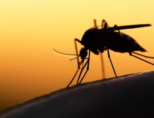 Συνεχίζεται το πρόγραμμα καταπολέμησης των κουνουπιών στην Περιφερειακή Ενότητα Ρεθύμνης