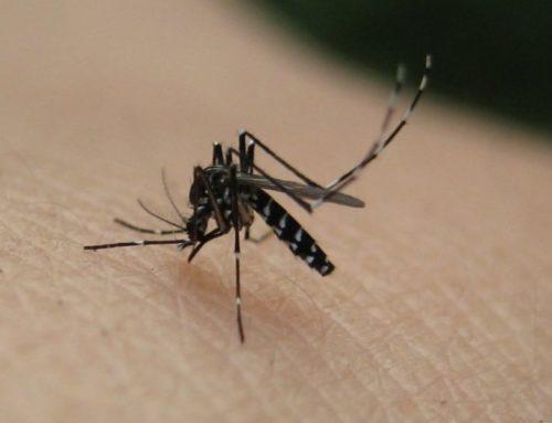 Πρόγραμμα καταπολέμησης των κουνουπιών στην Περιφερειακή Ενότητα Ρεθύμνης 18- 22 Μαϊου